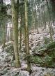 Jindřišské údolí