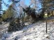 jalovcová stráň - přírodní památka