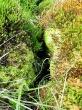 rašelinná louka Na pramenech