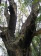 místy připomíná Opičák prales