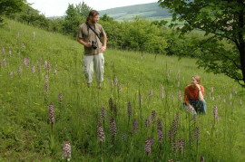 Pomáháme zachránit populace orchideí a vrátit jim místo pro rozvoj.