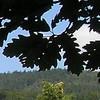 Střelenská louka - zachovaný kousek přírody takřka uprostřed vesnice (foto Jan Moravec)