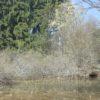 U kapličky - rybníček s blatnicemi