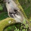 staré stromy-Hraničky_(foto Jan Moravec) náhled