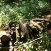 Dobre-hory-ponechane-drevo-pro-hmyz-plazy-a-drobne-savce-foto-Jan-Moravec